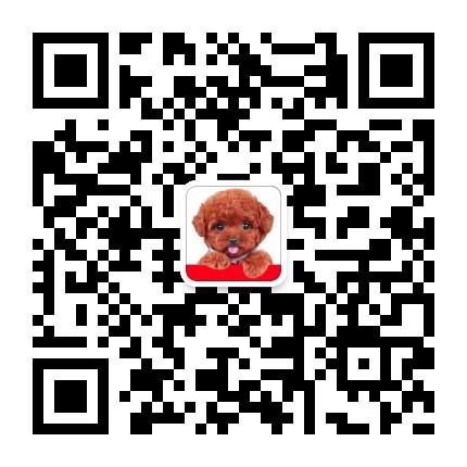 狗迷广州狗场